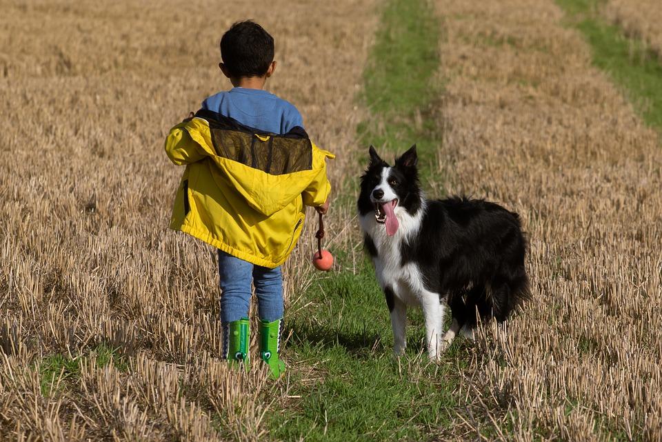Perros: mejores aliados para el desarrollo socioemocional de los más pequeños